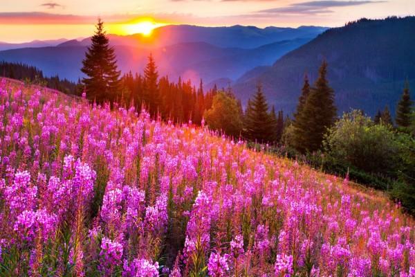 El sol alumbrando las flores