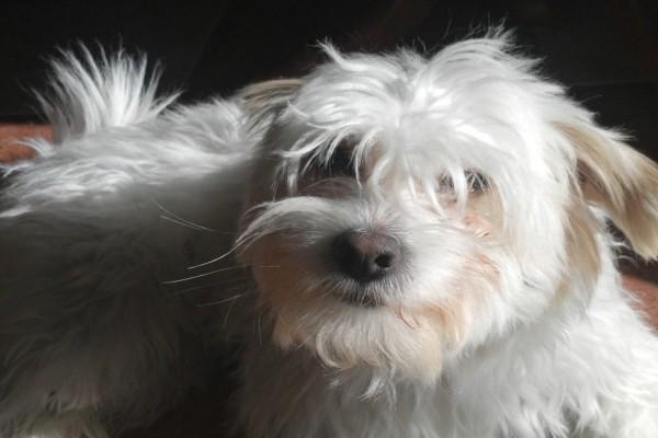 Un bonito perro de color blanco