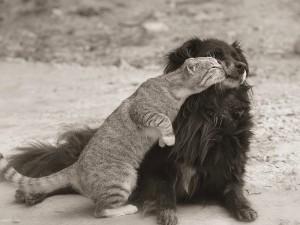 Un gato y su amigo canino