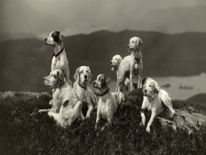 Un grupo de perros contemplando el paisaje