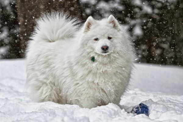 Un bonito perro blanco en la nieve