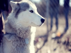 Postal: La cara de un bonito perro