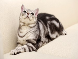 Bonito gato mirando al techo