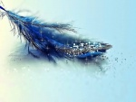 Pluma azul brillate