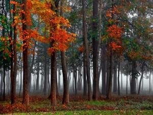 Bosque en otoño con niebla