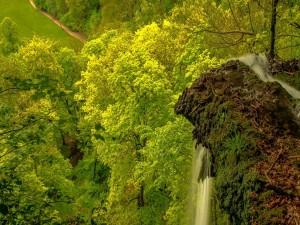 Corriente de agua entre los árboles y las rocas