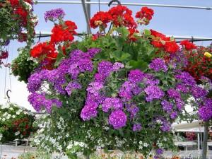 Postal: Arreglo floral colgado