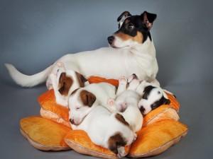 Postal: Una perra con sus cachorros