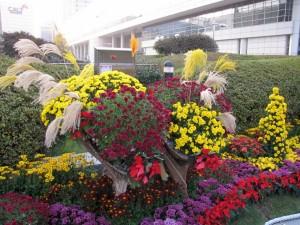 Crisantemos de varios colores en un jardín