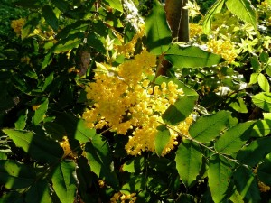 Postal: Florecillas amarillas y hojas en las ramas