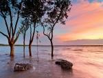 Árboles y piedras en el lago