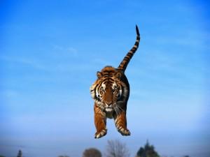 El salto del tigre