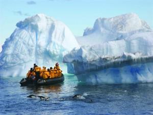 Embarcación junto a grandes icebergs y pingüinos nadando
