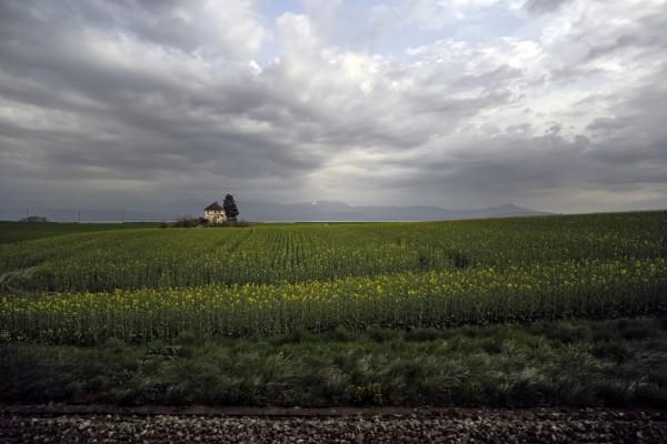 Plantación y una vivienda