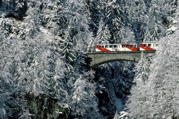 Tren entre los grandes pinos nevados