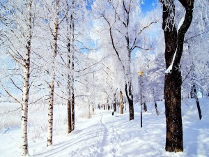 Postal: Camino nevado entre árboles