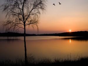 Postal: Aves sobre el lago al atardecer