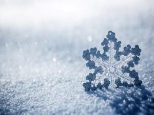 Postal: Copo de nieve helado sobre la nieve