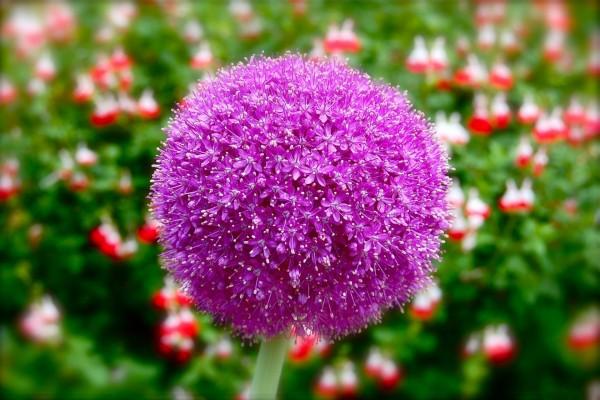 Pequeñas flores formando una bola