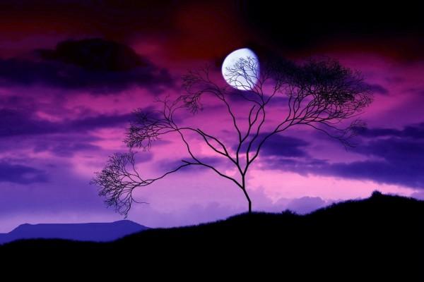 Árbol y la luna