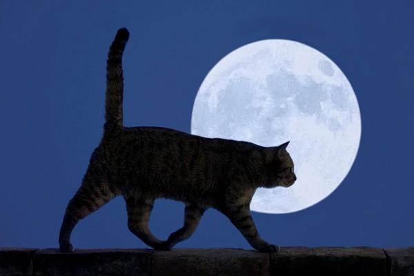 Un gato y la luna