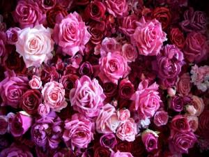 Rosas y hortensias en tonos rosas