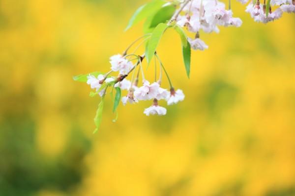Rama con florecillas y hojas verdes