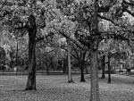 Árboles en blanco y negro
