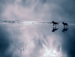 Caballos corriendo en la playa