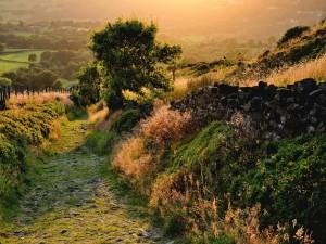 Postal: Camino rural en el campo verde