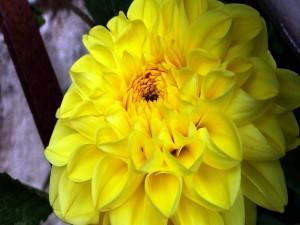 Postal: Pequeño insecto en los pétalos de la flor amarilla