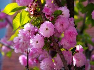 Rama con flores rosas