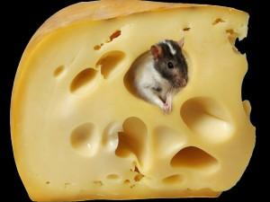 Postal: Ratoncito en el queso