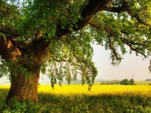 Un gran árbol poblado de hojas verdes