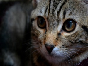 La mirada atenta del gato