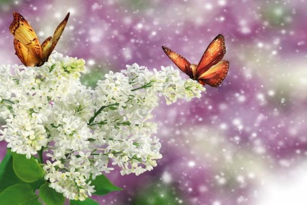 Mariposas posadas sobre unas flores blancas
