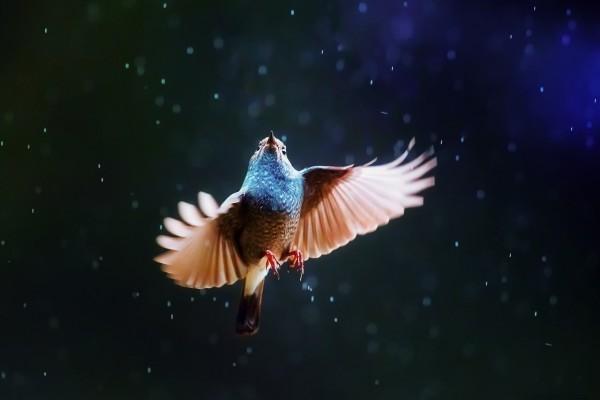 Pájaro bajo la lluvia
