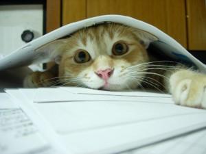 Postal: Gato estudiando