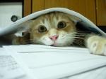 Gato estudiando
