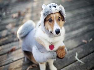 Un perro con disfraz de koala