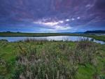 Cardos y hierbas junto al lago