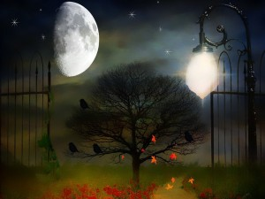 La luna iluminando la noche