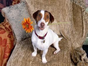 Perro con una flor naranja en la boca