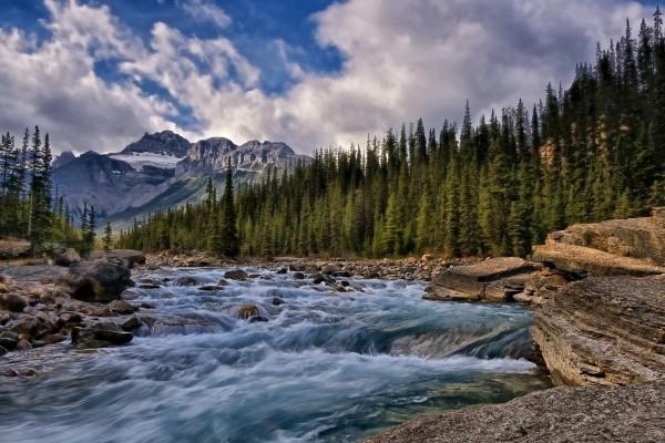 Un río entre pinos y montañas
