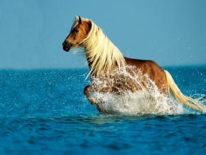 Postal: Un caballo en el mar