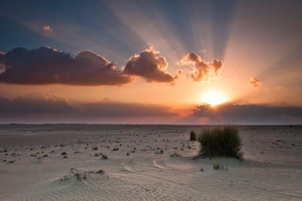 Escasas hierbas en el desierto