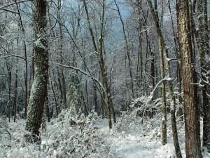 Hermoso bosque con nieve