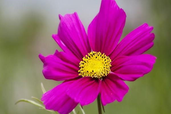 Flor con pétalos color fucsia
