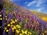 Campo con flores de bonitos colores