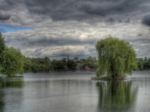 Árbol dentro del lago
